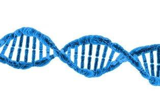 badania genetyczne plodu
